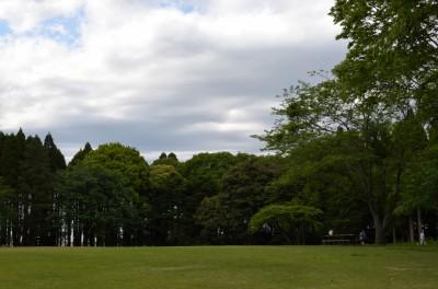 公園の木々4
